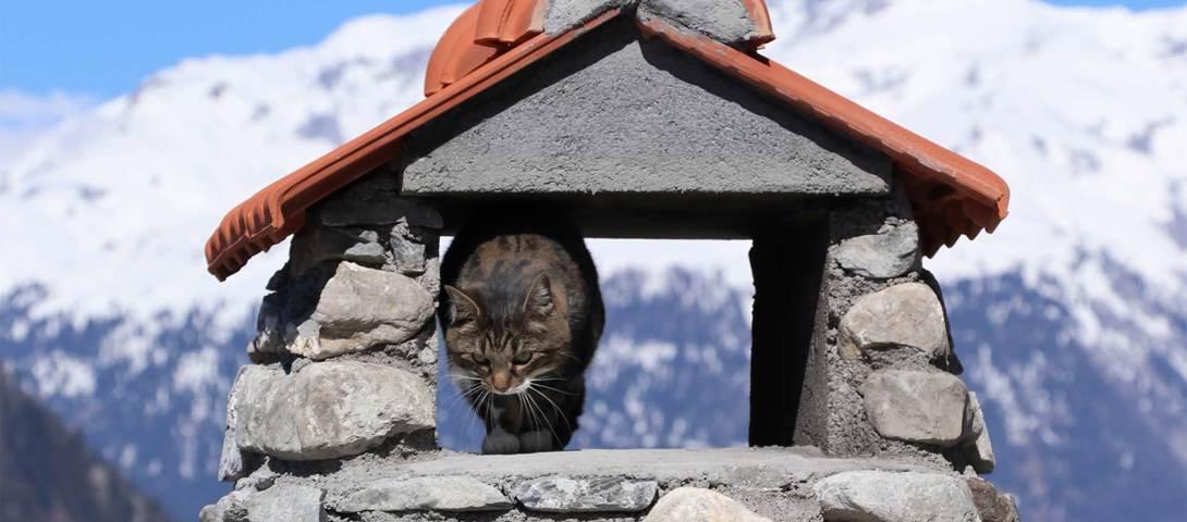 Smart-Home-Komfort im ehemaligen Patrizierhaus